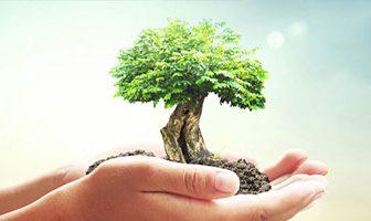 Environnement : pollution, biodiversité…