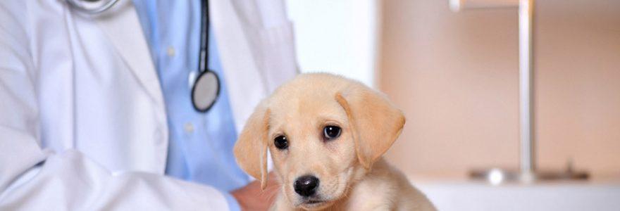 Conseils pratiques pour guérir la diarrhée du chien